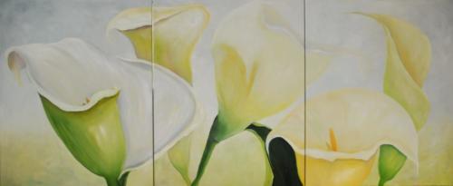 3 Luik CallasAfmeting80 cm x  3 meter