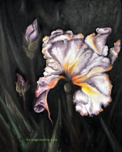 Bijzondere Iris